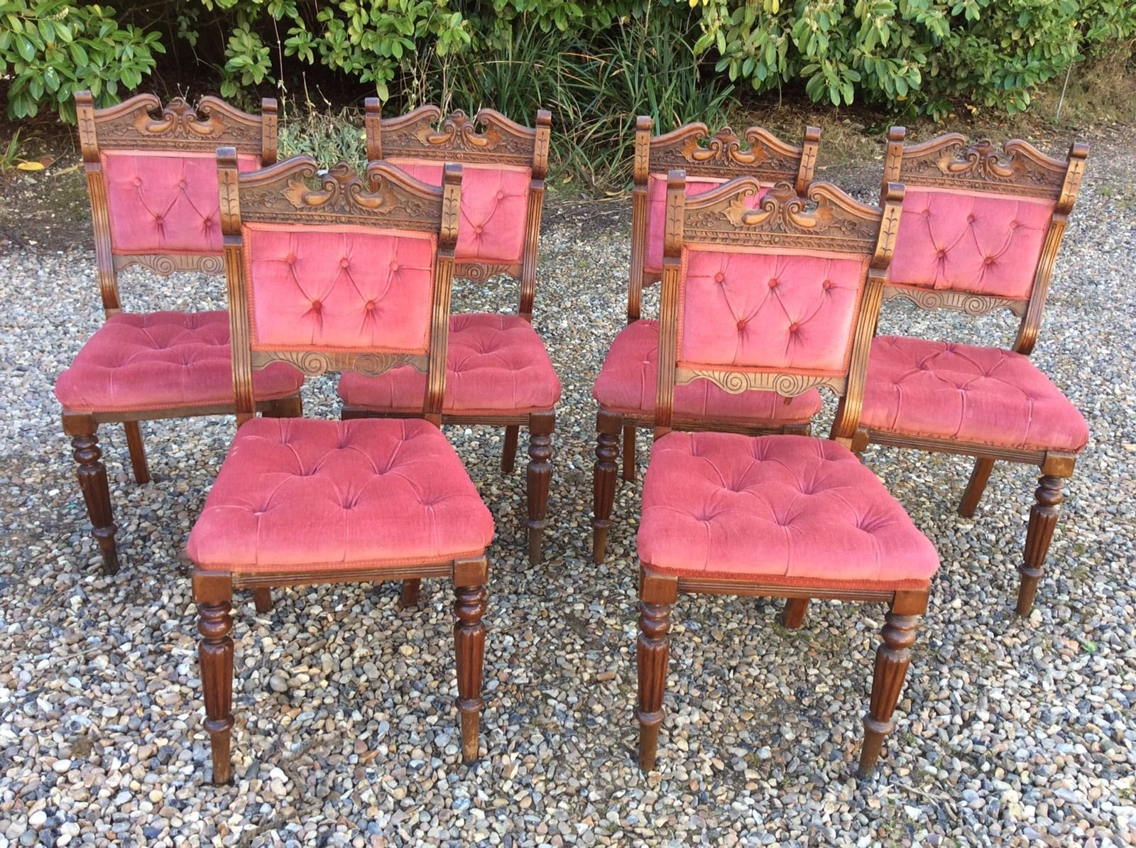 Six Matching Victorian Edwardian Upholstered Dining Chairs Pink Velour
